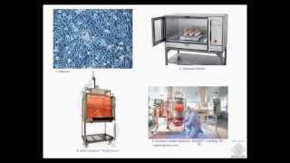 Umh1399 2012-13 Lec001-4c Transgénicos Y Microbiología Industrial