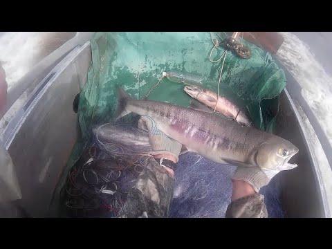 лицензия на ловлю рыбы сетями в новосибирске