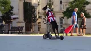 animale faza tare caine pe scooter