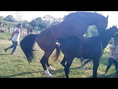 Video Una tarde de pacion xxx animal download in MP3, 3GP, MP4, WEBM, AVI, FLV January 2017