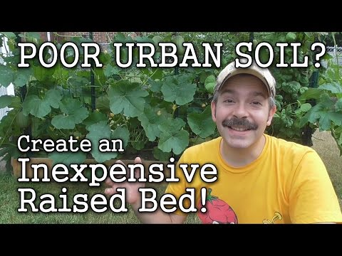 Top Organic Raised Bed Gardening Advice From The Experts