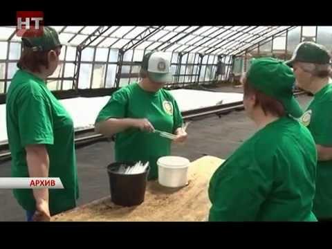 В департаменте сельского хозяйства и продовольствия прошло совещание по развитию семеноводства картофеля