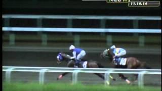 RACE 4 MR. TATLER 11/24/2014