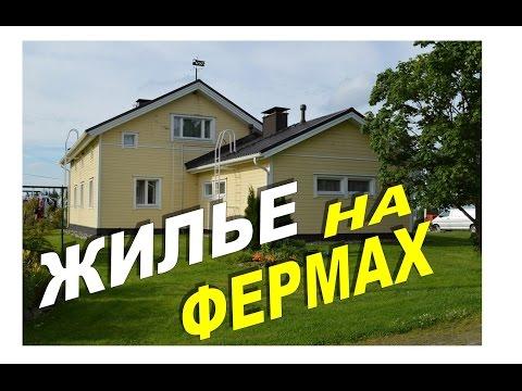 Условия проживания на ферме в Финляндии