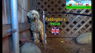 Paddington - homeless and lonely... can you help him? by Hope For Paws