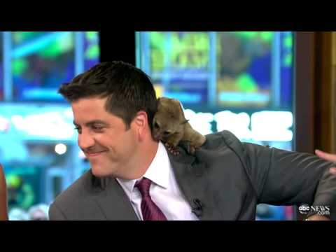 Animal Poops on News Anchor: TV News Bloopers 2012