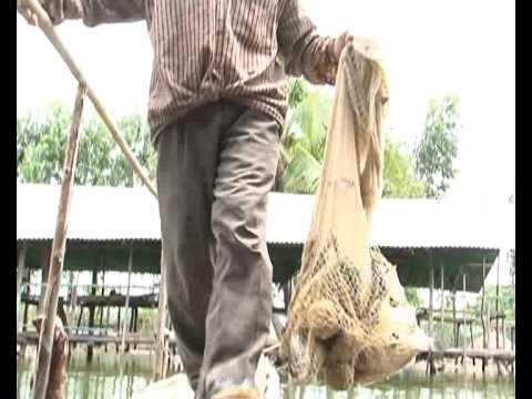 การพัฒนาระบบการจัดการฟาร์มปลานิล