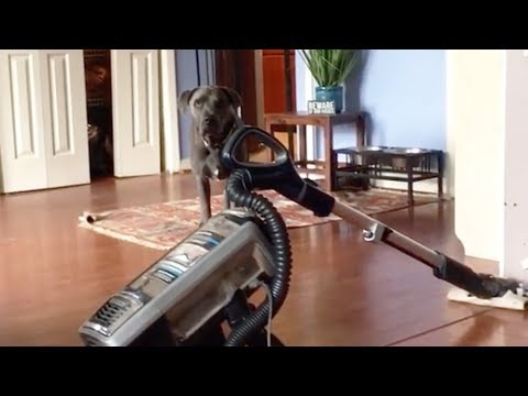 Funny face - Scaredy-Dog Can't Face The Vacuum!
