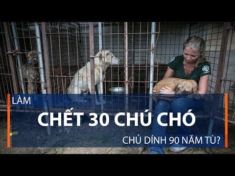 Làm chết 30 chú chó, chủ dính 90 năm tù? | VTC1 - Thời lượng: 74 giây.