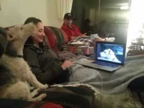 Dogs On Skype