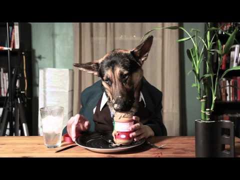 Hund käkar lite kvällsmat