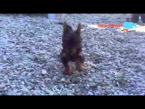 Pes a ůtok