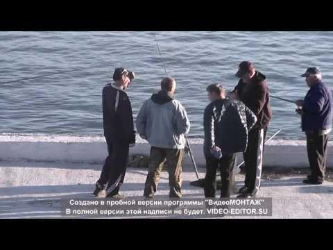 ловля салаки с берега