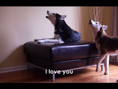 2 TALKING DOGS ARGUE - SUBTITLED%21 Mishka %26 Laika