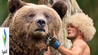 Download Video سترتعش عندما تعرف لماذا حبيب البطل يصارع الدببة.. حالته ادهشت العالم كله...!!! MP3 3GP MP4