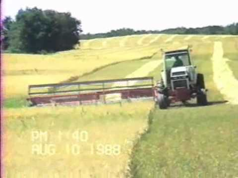 swathing - Swathing barley in Sask.