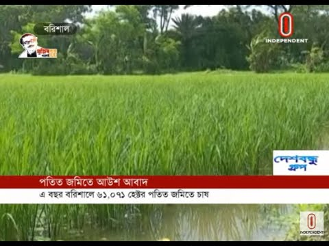 Paddy cultivation in fallow lands in Barisal this time (03-07-2020) Courtesy:Independent TV