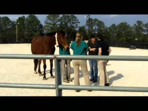 Hoffe on Horseback