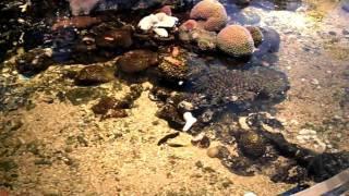 Rayong Aquarium Overlooking Koh Samet Thailand