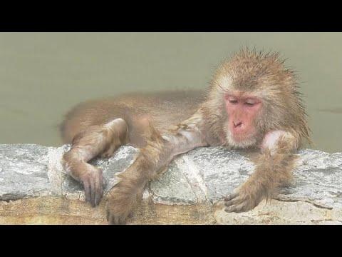 Japan: Affen baden auf Hokkaido in heißen Quellen