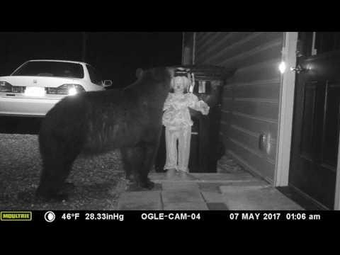 Tätä karhua ei varmaan enää nähdä tällä roskiksella kaivelemassa