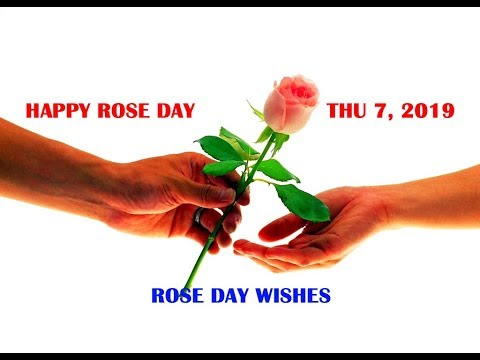 Rose Day Wallpaper: Rose Images With Love Messages, रोज़ डे मुबारक 2019