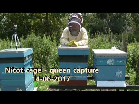 Queen Into Nicot & Cell Starter 14 06 2017