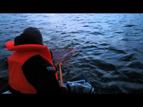 ловля судака на ладожском озере видео