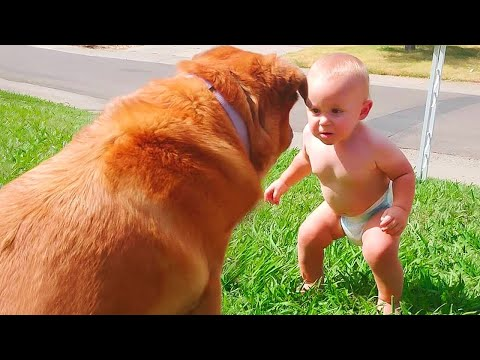 Cute Babies and Dogs are Best Friends - Funny Baby Videos