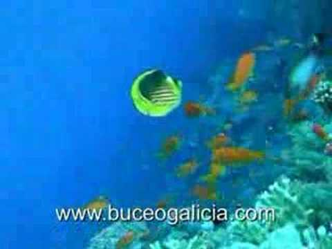 Inmersión en el Mar Rojo