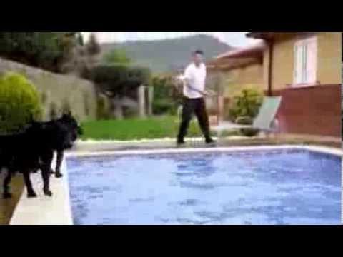 cane corso in acqua