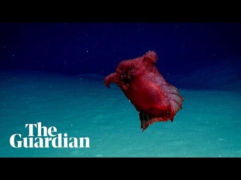 Outo olento meren syvyyksissä!