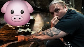 ANACONDA POOPS OUT A 15 POUND PIG!! | BRIAN BARCZYK by Brian Barczyk