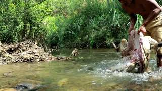 Video adventure in forest - Bezoar Ibex Hunting end cooking  Eating delicious MP3, 3GP, MP4, WEBM, AVI, FLV Mei 2019