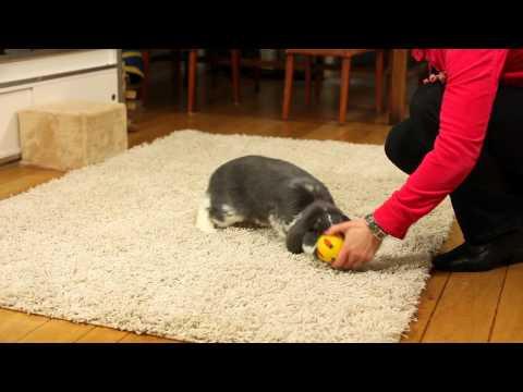 Spelen met je konijn