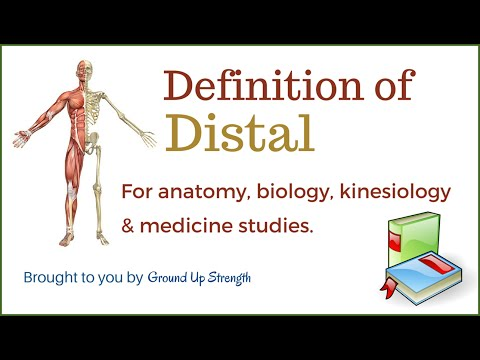 Definition Distal And Proximal 945 Mb Wallpaper