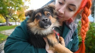 Fanny experiences life after dog meat farm rescue! by The Humane Society of the United States