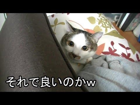 【猫】重すぎる掛布団