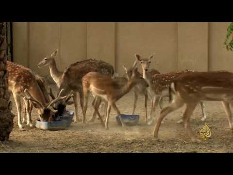 العرب اليوم - شاهد: جهود بيئية للحفاظ على المحميات الطبيعية في عُمان