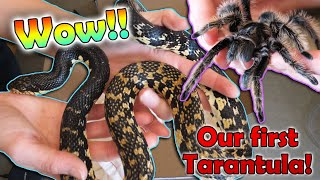 Unboxing 3 Amazing Animals!! by Snake Discovery