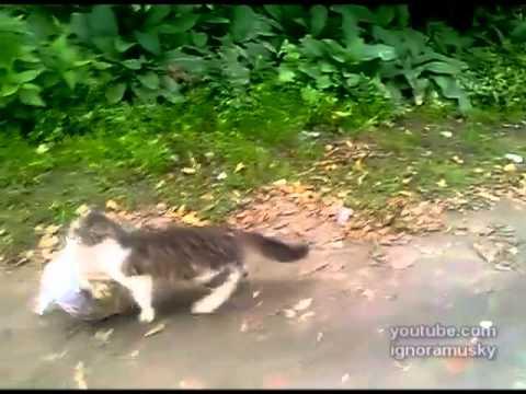 un gatto torna a casa dopo aver fatto shopping!