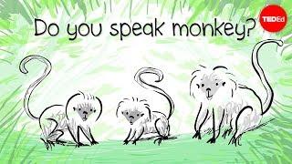 How to speak monkey: The language of cotton-top tamarins – Anne Savage