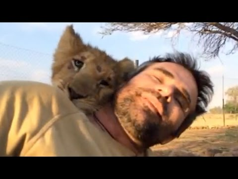 two - Kevin Richardson (The Lion Whisperer) along with CACH (Campaign Against Canned Hunting) have rescued two lion cubs called George and Yame from a beach in Spain. Subscribe to the channel ...