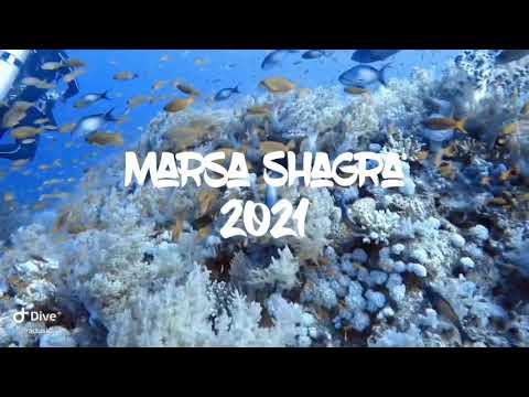 Amazing Marsa Shagra