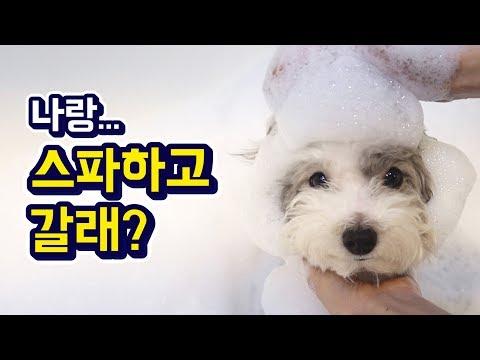 강아지 버블 스파 풀 파티! / Pet Dog Bubble Spa Party - Thời lượng: 4 phút, 34 giây.