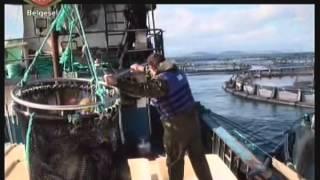 TRT Belgesel Kafesteki Balıklar Bölüm 2