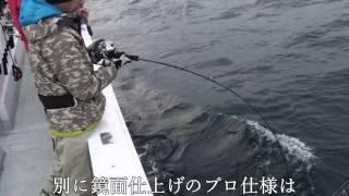 電動ジギング専用ジグ、ロッドによるブリ圧倒的釣果