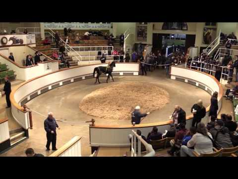 Tattersalls Autumn Horses in Training Sale 2015 Day 3