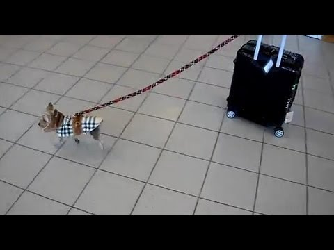 The World's Most Funny Dog Videos May 2014