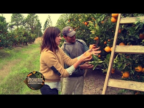De la tierra a tu mesa, naranjas